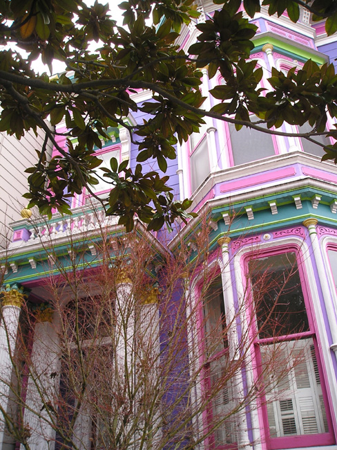 Magnolia and the Painted Lady