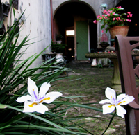 Iris Flowers In A Courtyard